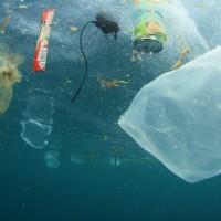 Mikroplastik erstmals im Menschen gefunden
